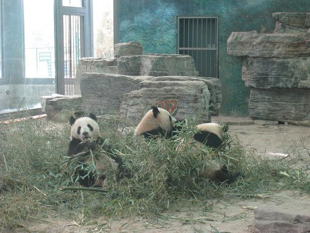 26 北京動物園 (9)