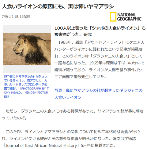 人食いライオン
