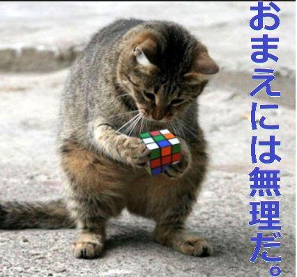 今日のボヤキ 細川 猫