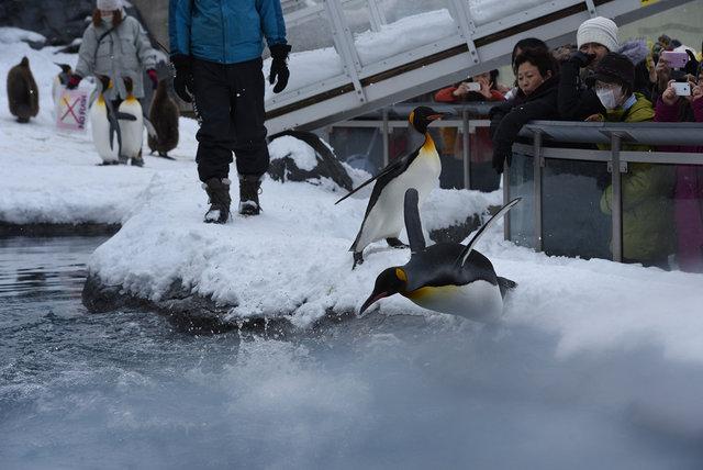 2日目ペンギン (17)s