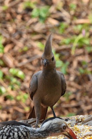 Grey bird (9)