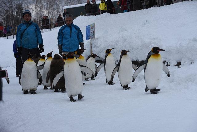2日目ペンギン (9)s