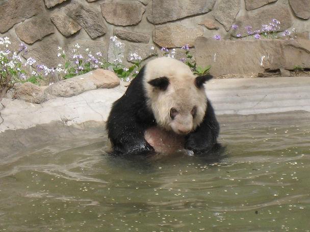 26 北京動物園 (6)