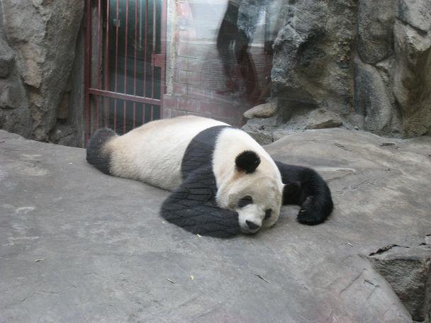 26 北京動物園 (3)