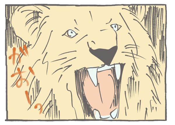 65-62ライオン