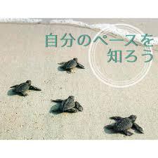 images_20151015193002f9e.jpg