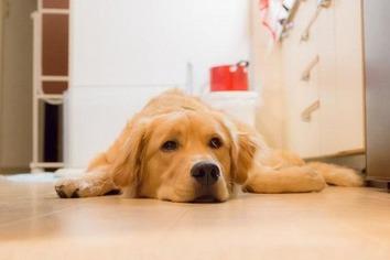 飼いやすい室内犬5-600x400