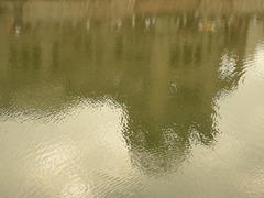 元安川水面1