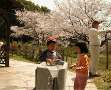櫻・バラ公園5