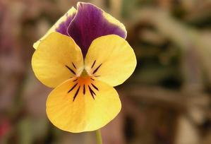 根元の花2