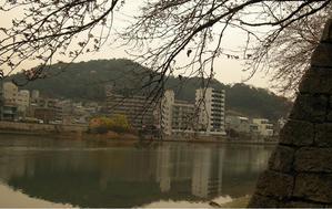 櫻・二葉山2