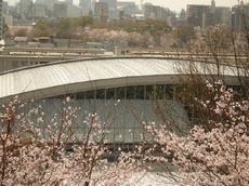 櫻・バラ公園3
