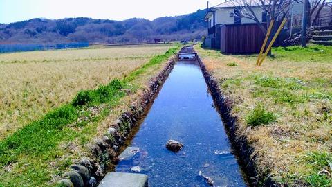 長閑な水路
