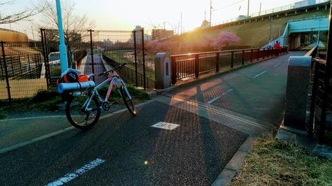 朝日と多摩湖自転車道