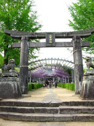 090419-yamadanofuji01