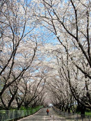 090329-nishihitoyoshi01