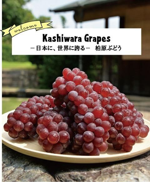 grape_top_main03