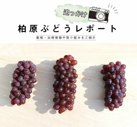 budou_report_main02