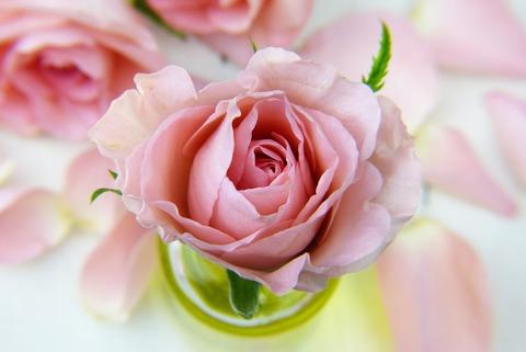 flower-3086563_1920