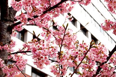 春です、春。