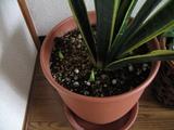 観葉植物7.27