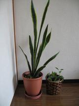 観葉植物全体7.27