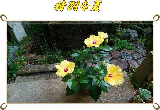 DSC_2654