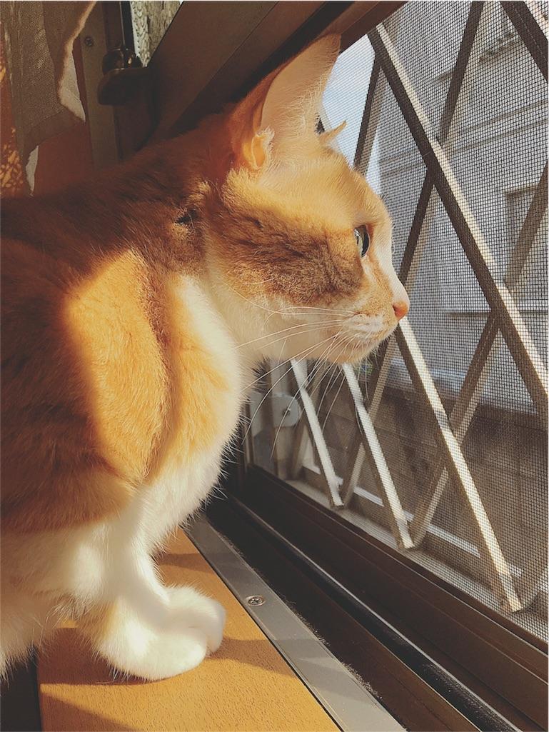 f:id:yukiko_tea:20160612072841j:image