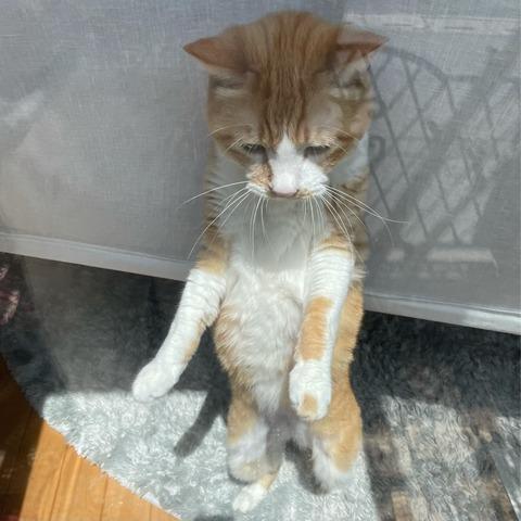 梅雨前にやりたい家事!一気に終了&2足立ちネコ