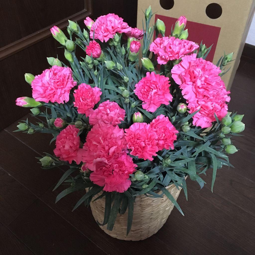 届いた当日も綺麗でしたが、その後もつぼみが花を開き、とても賑やかになっています。