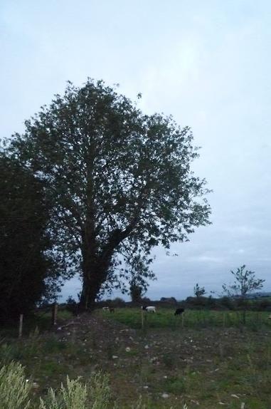 家のうしろの木とうし