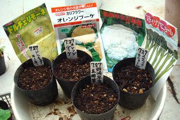 種蒔き2020.07.27