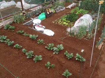 区民農園 -3