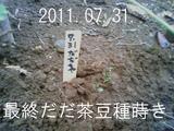 だだ茶豆種蒔き2011.07.31