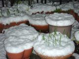 雪2012.01.24