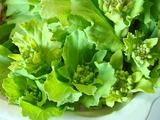 山東菜菜花2012.03.26