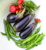 バルコニー菜園収穫10.11
