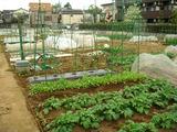 区民農園2011.05.01