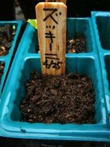 ズッキーニ種まき09.04.25.jpg