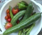 バルコニー菜園収穫2011.07.31