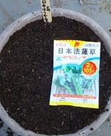 日本ホウレンソウ2010.03.14.jpg