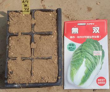 白菜種蒔き2019.04.07
