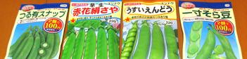 豆の種2015.10.2