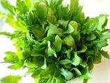 ホウレンソウ収穫2011.04.15