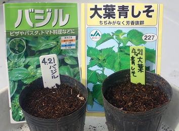 種蒔き 2020.04.21