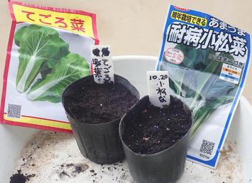 種蒔き2019.10.21