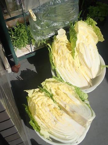 白菜漬け2020.02.19