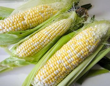トウモロコシ収穫 2017.07.03