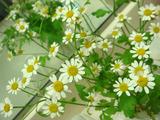 きれいな花2012.01.10