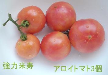ふさ採りトマト2020.08.14